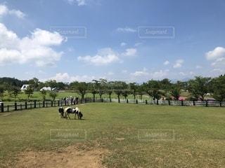 緑豊かな野原で放牧する牛の群れの写真・画像素材[2431788]