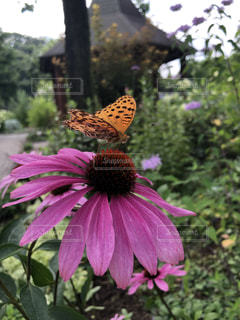 花のクローズアップの写真・画像素材[2431794]