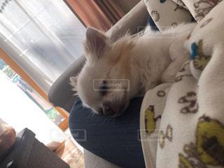 ぬいぐるみの上で眠っている猫の写真・画像素材[2950230]
