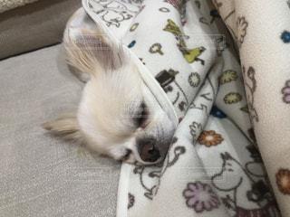 ベッドに横たわる猫の写真・画像素材[2997858]