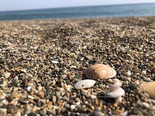 岩場の海岸で食べ物をクローズアップするの写真・画像素材[3042794]