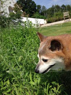 犬の写真・画像素材[324147]