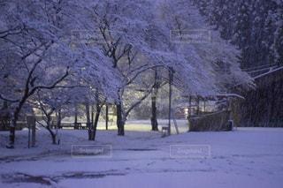 冬の写真・画像素材[326775]