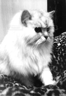 猫の写真・画像素材[324224]
