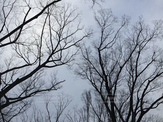 冬の写真・画像素材[325438]