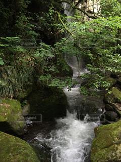森の写真・画像素材[327860]