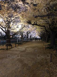 未舗装の道路上のツリーの写真・画像素材[937046]