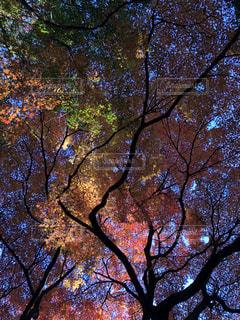 近くの木のアップの写真・画像素材[1653050]