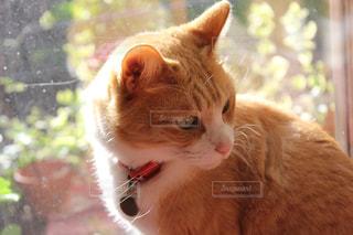 猫の写真・画像素材[327440]