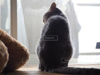 窓の前に座っているテディベアを見ている猫の写真・画像素材[2888481]