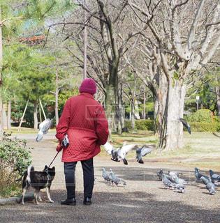 男と犬をひもでの写真・画像素材[2972311]
