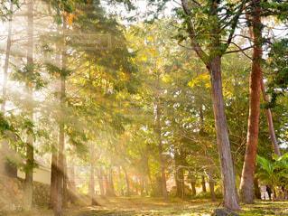 森の中の木の写真・画像素材[2985002]