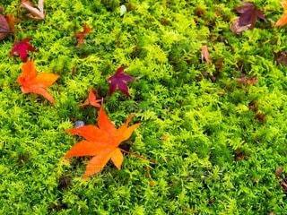 植物の色とりどりの花の写真・画像素材[3486810]