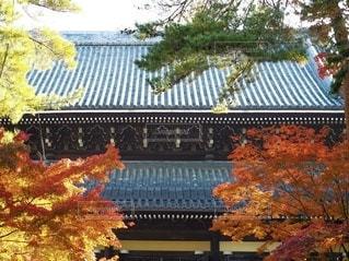 建物の前の木の写真・画像素材[3486811]