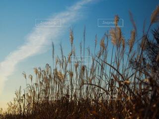 秋の始まりの写真・画像素材[3684628]