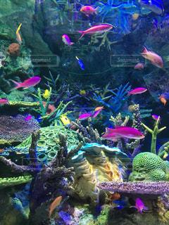 魚 - No.325938