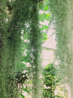 緑の写真・画像素材[324603]