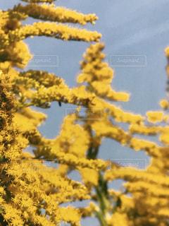近くの花のアップの写真・画像素材[1059252]