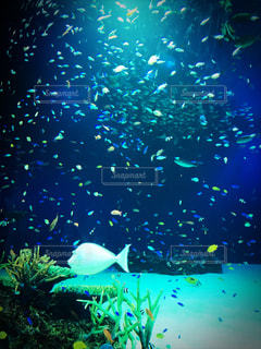 魚の写真・画像素材[1393967]