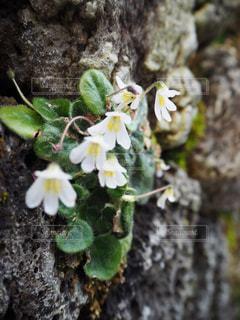 花のクローズアップの写真・画像素材[2423000]