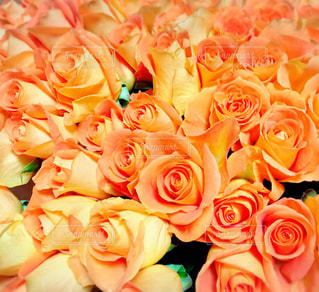 花の写真・画像素材[328915]