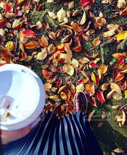 秋の写真・画像素材[325075]