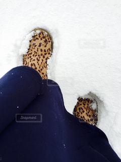 雪の写真・画像素材[325367]
