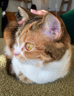猫の写真・画像素材[328320]