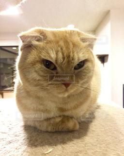 猫の写真・画像素材[336094]
