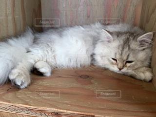 猫の写真・画像素材[336106]