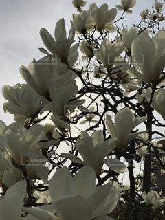 花の写真・画像素材[390310]