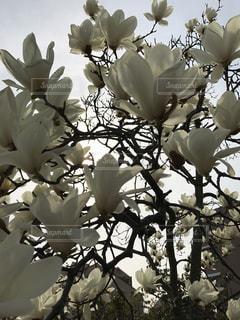 花の写真・画像素材[390311]