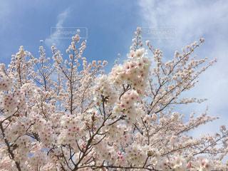 花の写真・画像素材[447948]