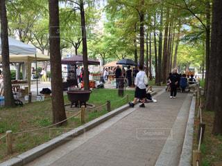 公園の写真・画像素材[331152]