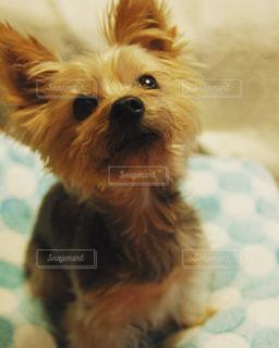 愛犬の写真・画像素材[328942]