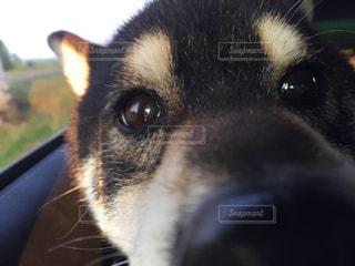 犬 - No.325747