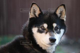 犬の写真・画像素材[326618]