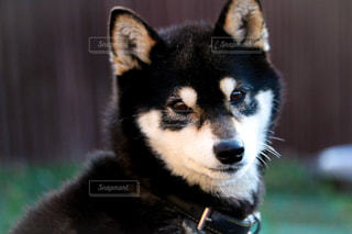 犬 - No.326619