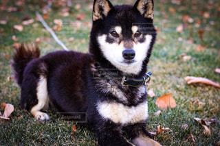 犬 - No.326673