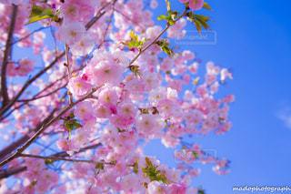 風景 - No.328129