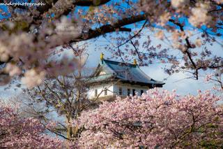 風景 - No.328130
