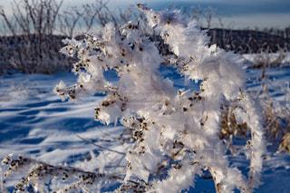 雪の上を飛ぶ鳥の群れに斜面が覆われています。 - No.982579