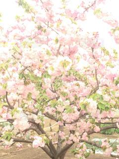 花の写真・画像素材[449830]
