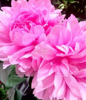 花の写真・画像素材[567937]
