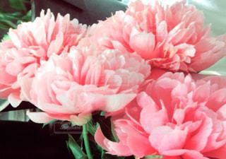 花の写真・画像素材[567939]