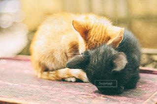 猫の写真・画像素材[326436]