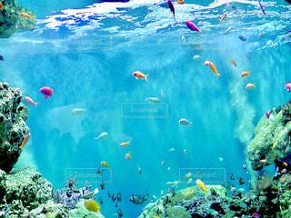 魚の写真・画像素材[338049]