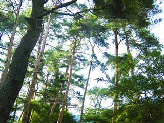 森林の写真・画像素材[359699]