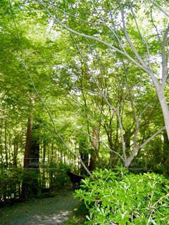 森林の写真・画像素材[359700]