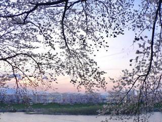 No.376606 風景